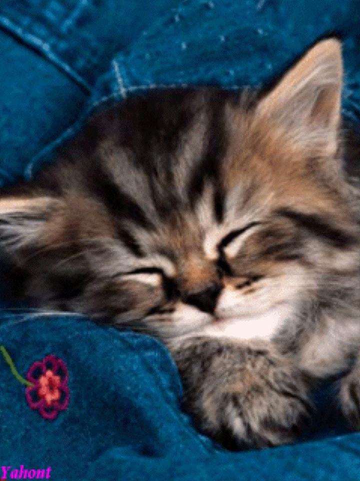 Мой милый котик картинки и открытки 016