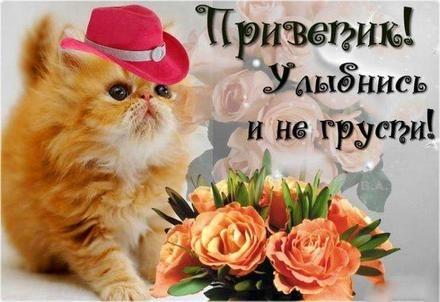Мой милый котик картинки и открытки 017