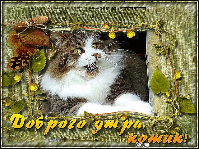 Мой милый котик картинки и открытки 018