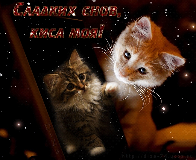 Мой милый котик картинки и открытки 022