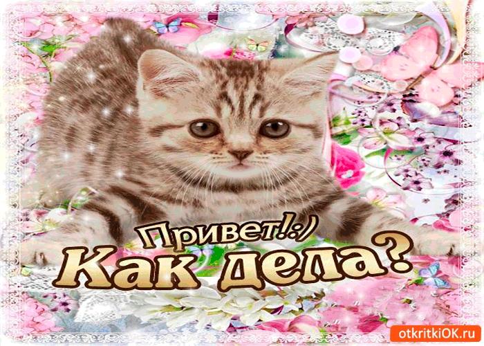 Мой милый котик картинки и открытки 023