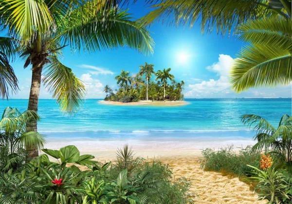 Море пальмы и песок фото и картинки001