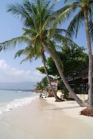 Море пальмы и песок фото и картинки002