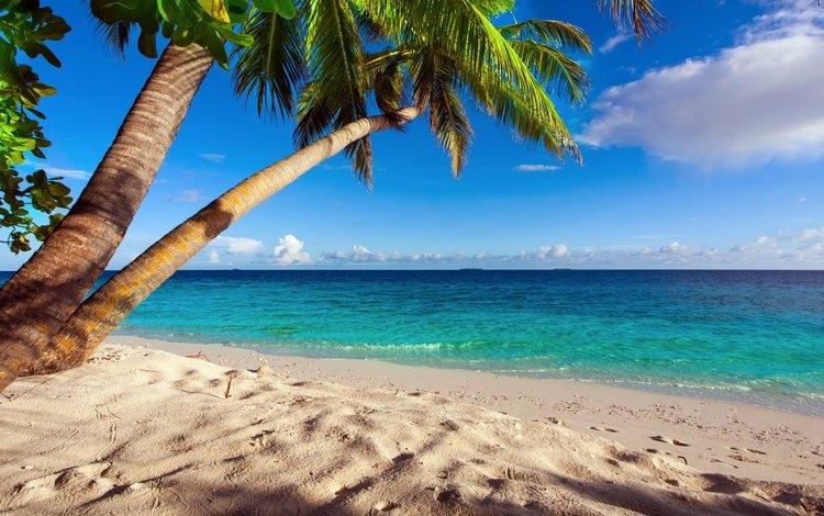 Море пальмы и песок фото и картинки003