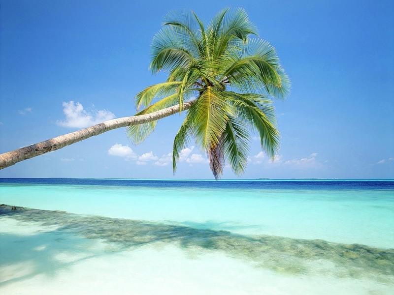Море пальмы и песок фото и картинки004