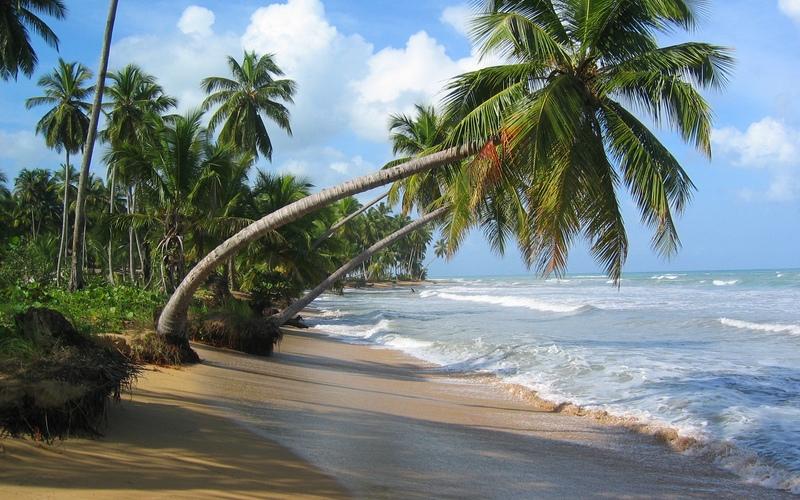 Море пальмы и песок фото и картинки005