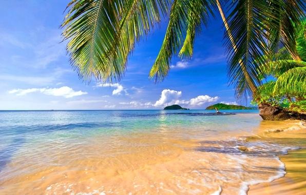 Море пальмы и песок фото и картинки006