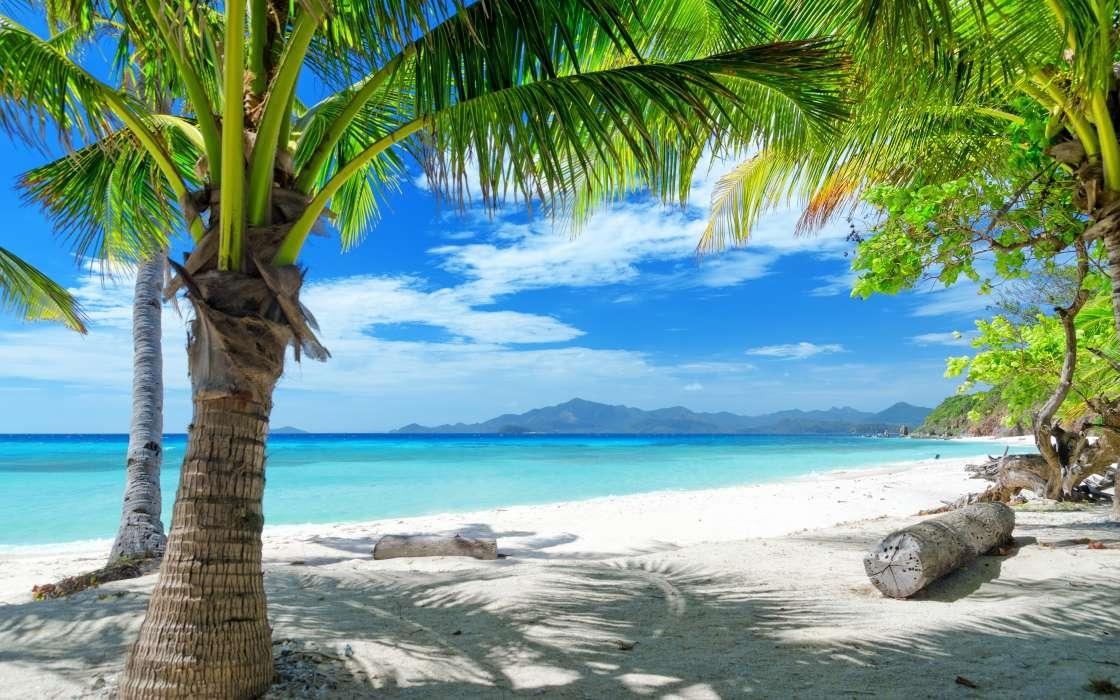 Море пальмы и песок фото и картинки011