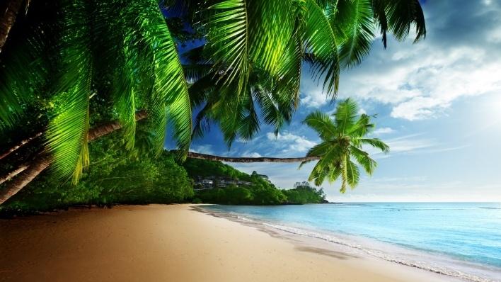 Море пальмы и песок фото и картинки014