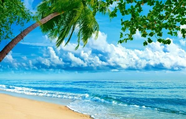 Море пальмы и песок фото и картинки016