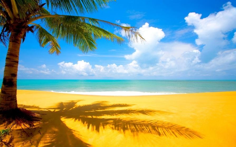Море пальмы и песок фото и картинки018