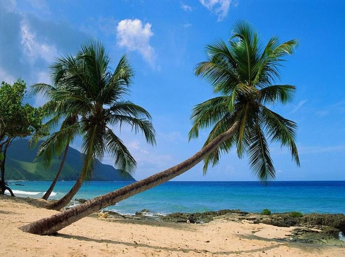 Море пальмы и песок фото и картинки019