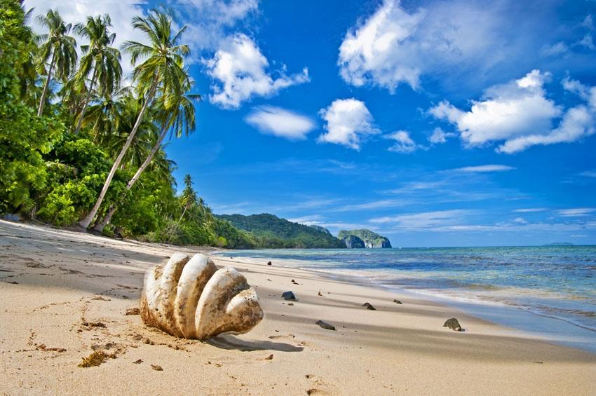 Море пальмы и песок фото и картинки022