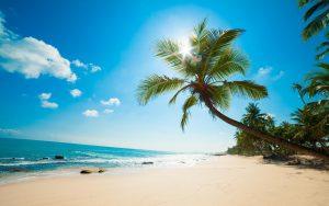 Море пальмы солнце картинки и обои (23)