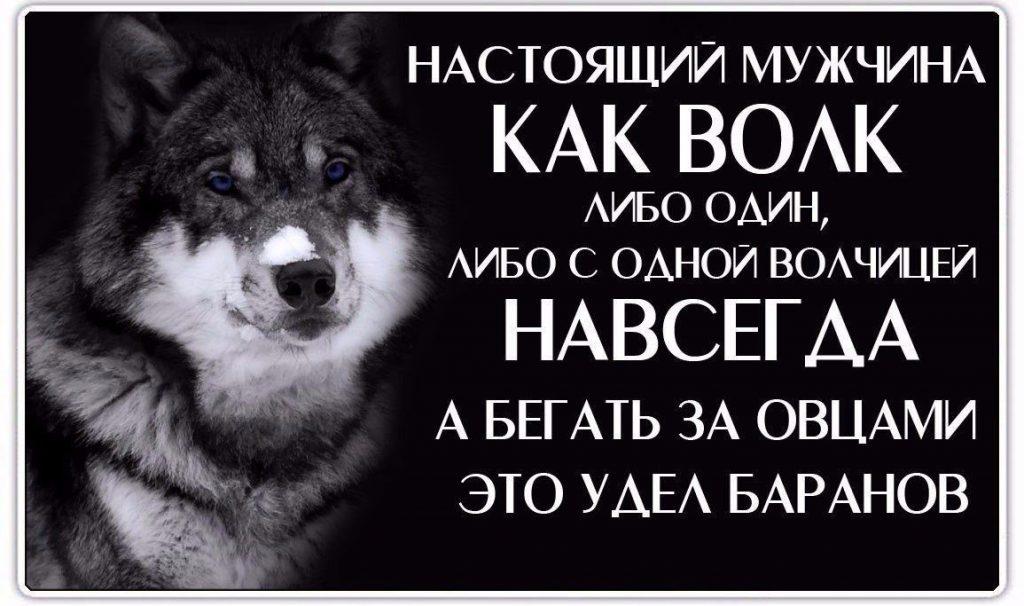 картинки волков с статусами смыслом мужские издавна считается