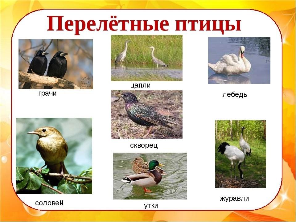 Картинки анимацией, перелетные птицы картинки с надписью