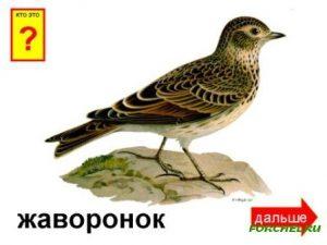 Названия перелетных птиц для детей   картинки 028