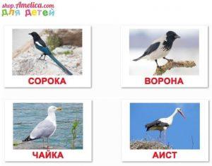 Названия птиц и их картинки для детей 013
