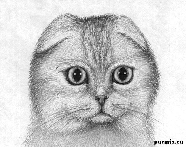 Няшки котики картинки нарисованные Самые няшные котики