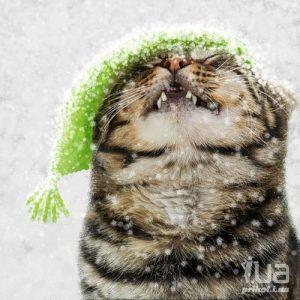 На носу зима картинки и фото026