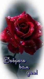 На ночь цветы любимой   красивые картинки 019