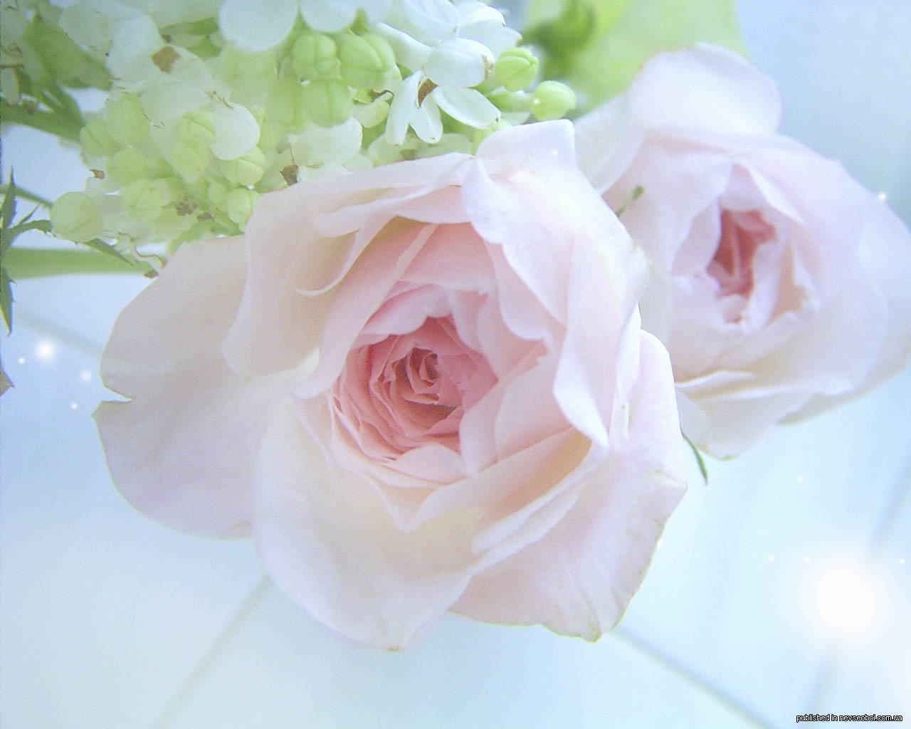 Нежные цветы открытка