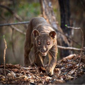 Необычные фото животных и природы 027
