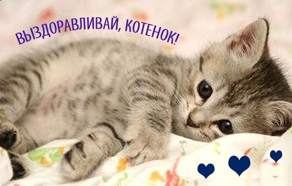 Выздоравливай картинки с котом
