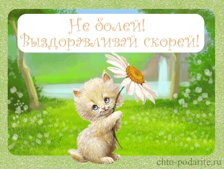 Не болей котик картинки и открытки 029