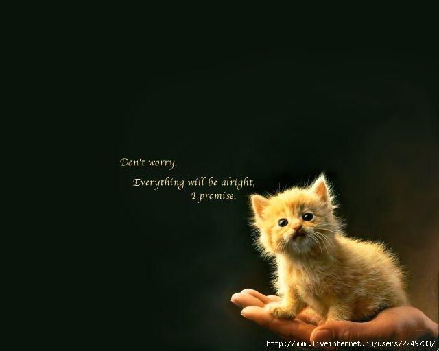 Не болей милый фото и картинки017