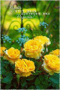 Ну очень доброе утро открытки 022
