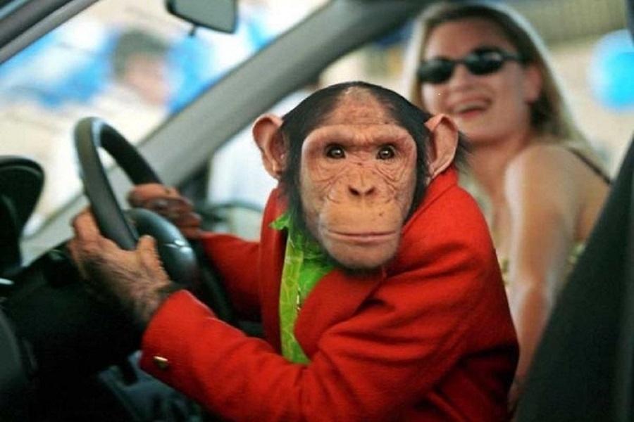 него смешные фото водителей скалистых районах
