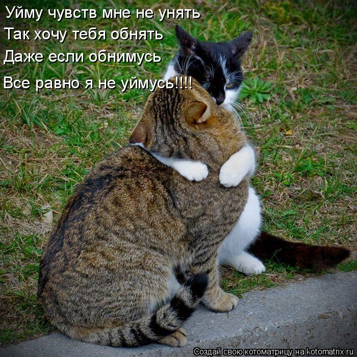 Обнять и нежно поцеловать   красивые открытки004
