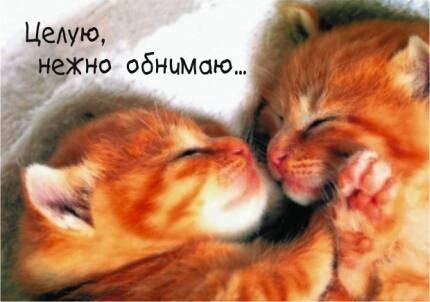 Обнять и нежно поцеловать   красивые открытки019