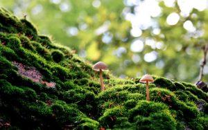 Обои грибы на рабочий стол   скачать бесплатно (40)
