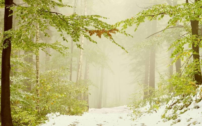 Обои для рабочего стола Первый снег природа   подборка (17)