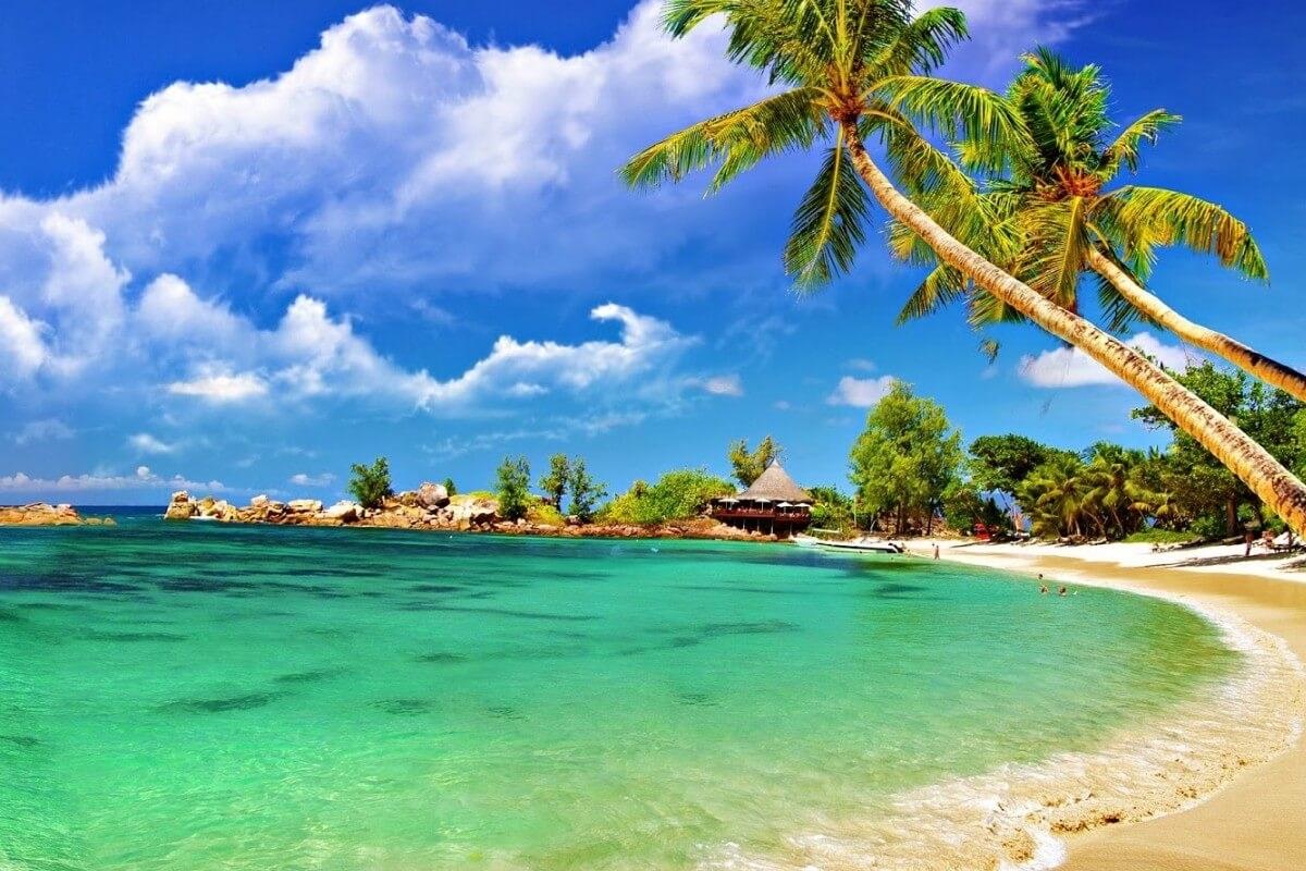 Обои для рабочего стола море пляж и пальмы008
