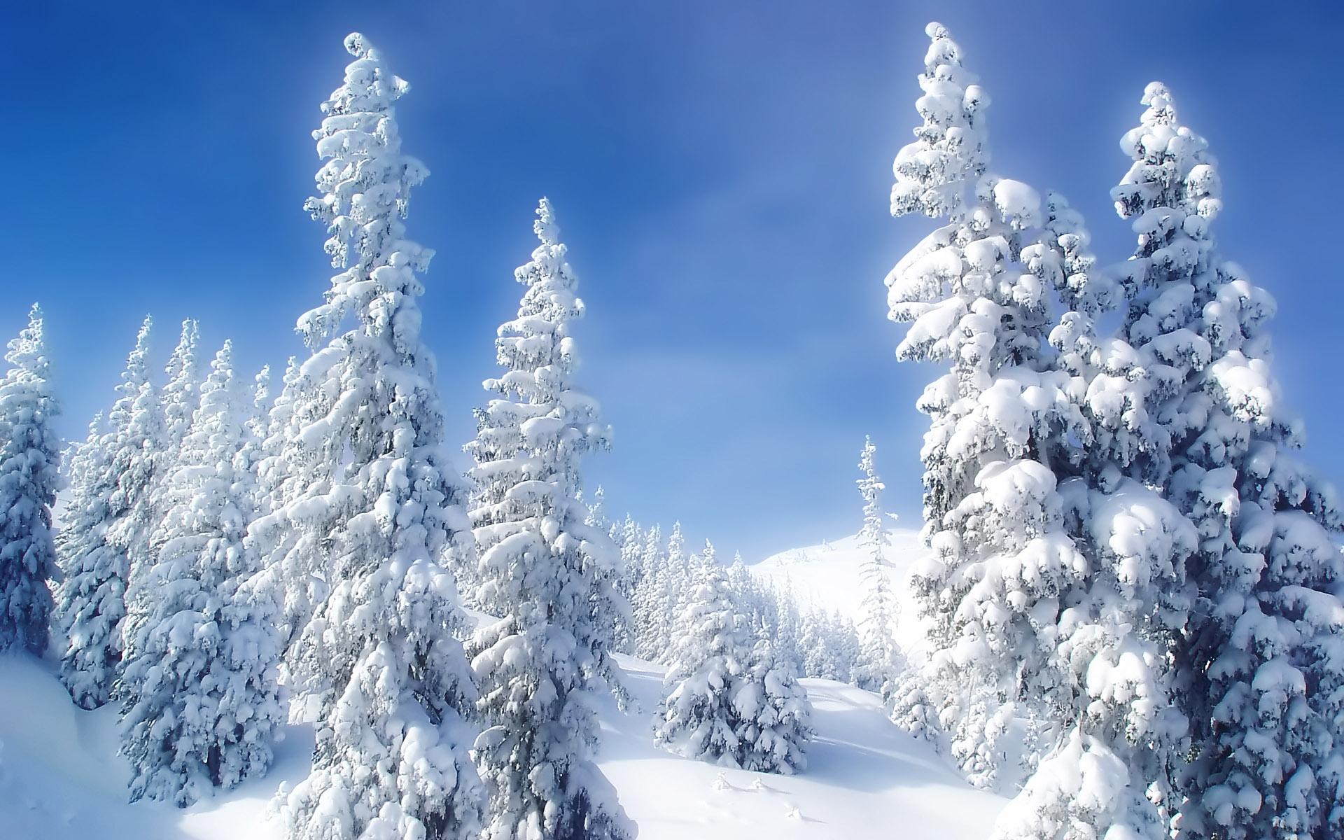 Обои зима на рабочий стол   лучшая подборка (2)