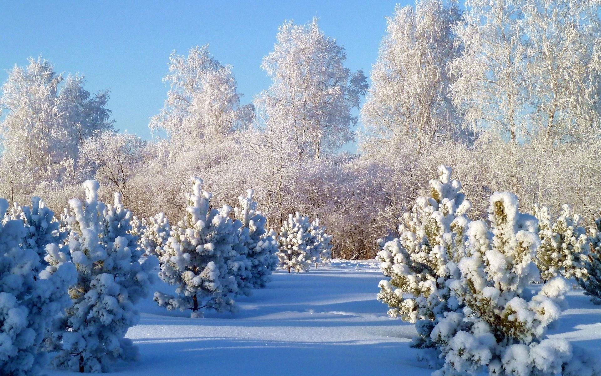 Обои зима на рабочий стол   лучшая подборка (3)