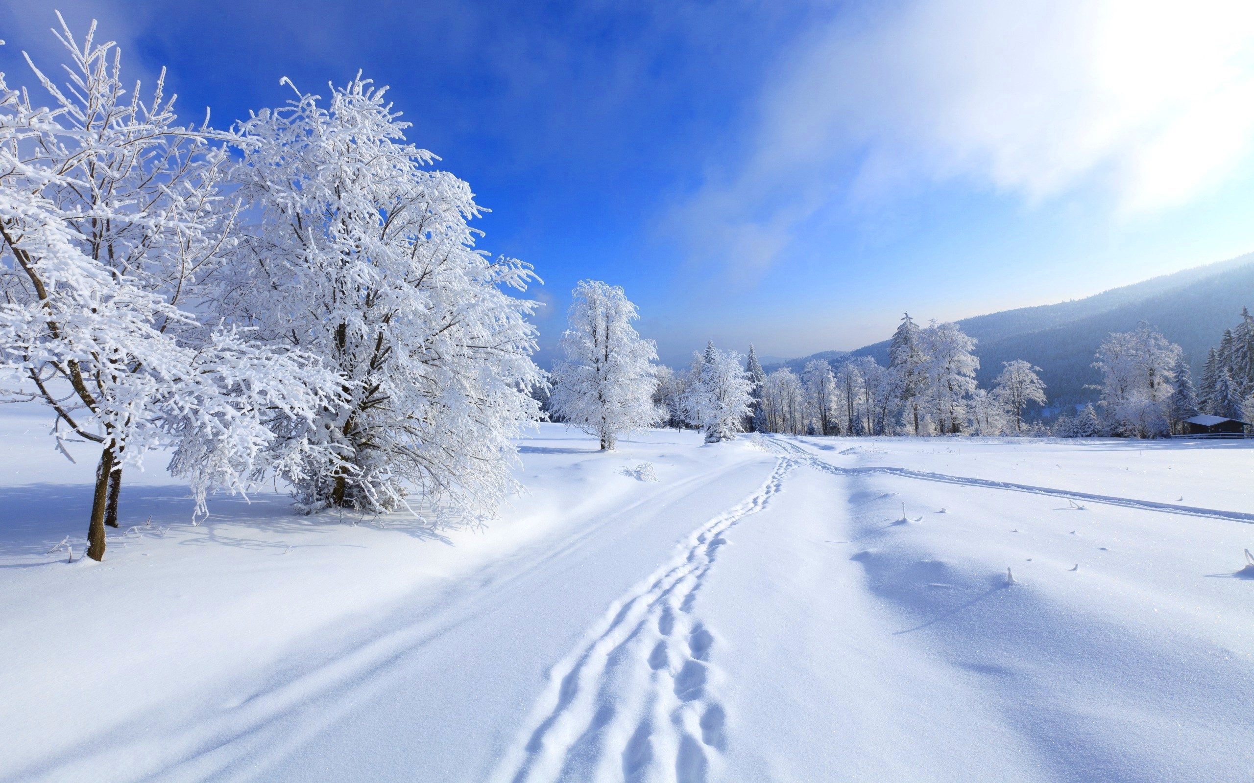 Обои зима на рабочий стол   лучшая подборка (8)