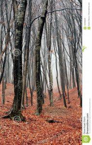 Обои и картинки леса скачать бесплатно (26)