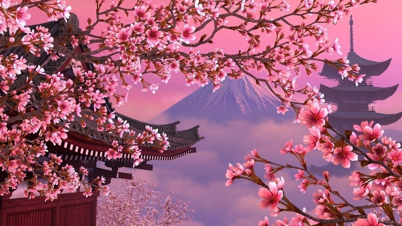 Обои на рабочий стол Сакура в цвету   сборка (13)