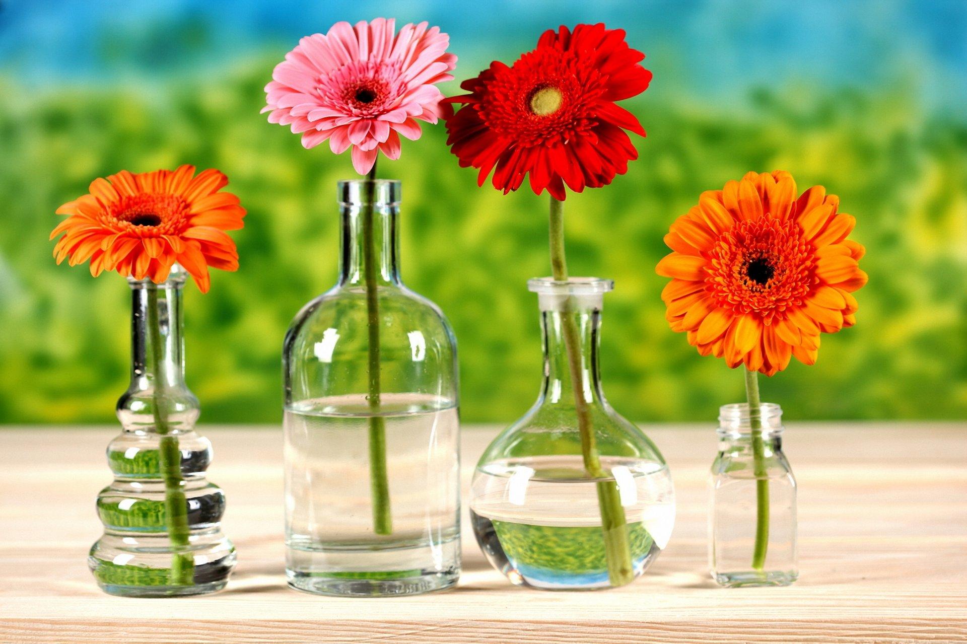 Обои на рабочий стол Цветы хризантемы   подборка (16)