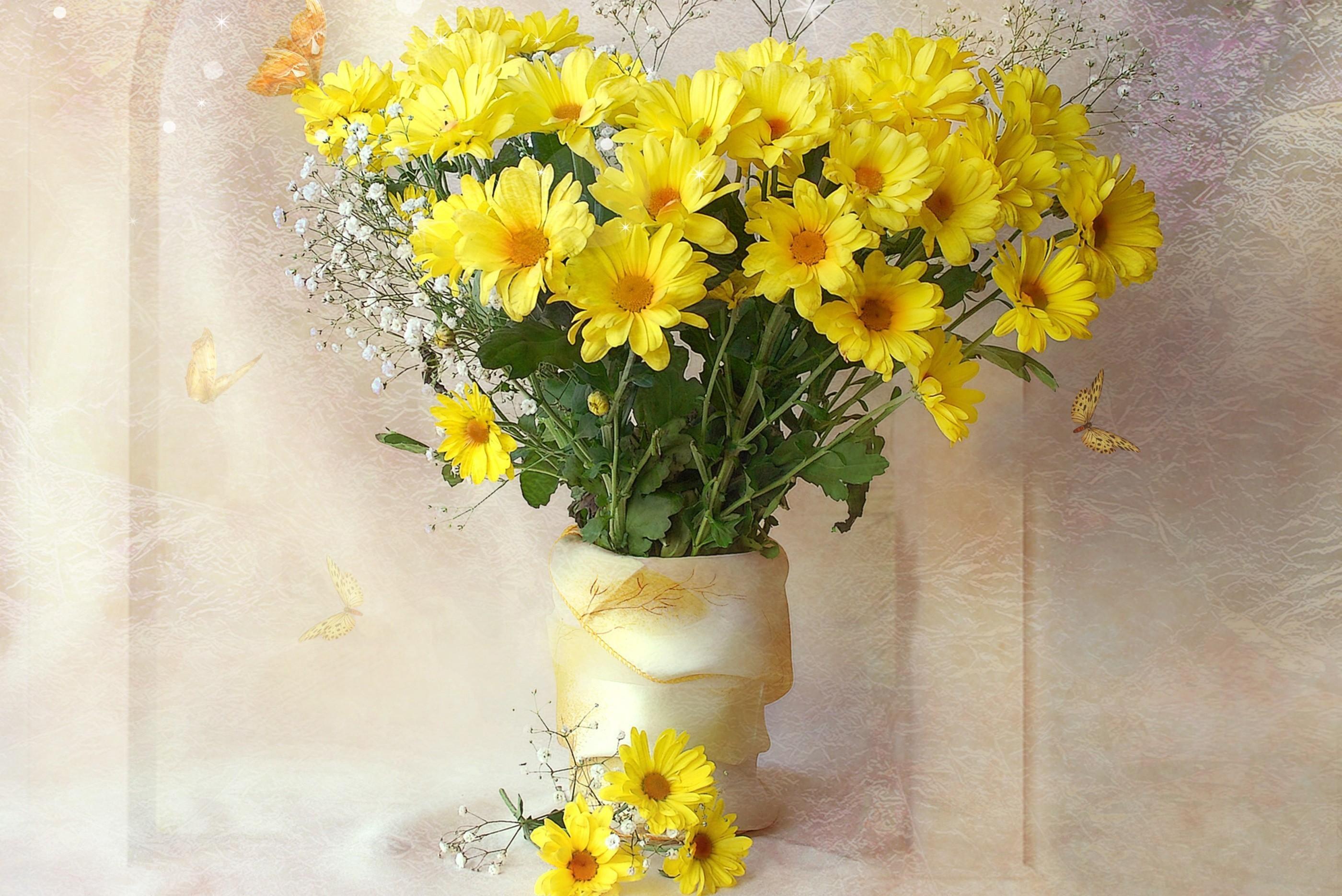 Обои на рабочий стол Цветы хризантемы   подборка (24)