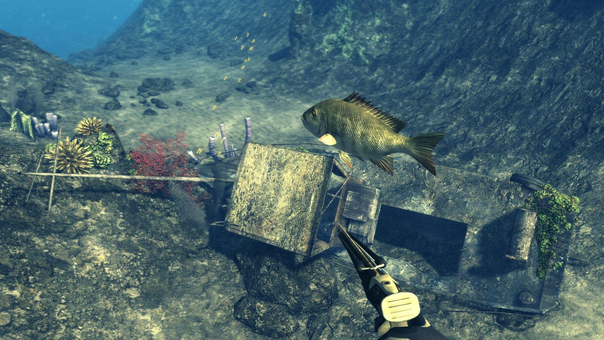 Днем, картинки подводная охота на рабочий стол