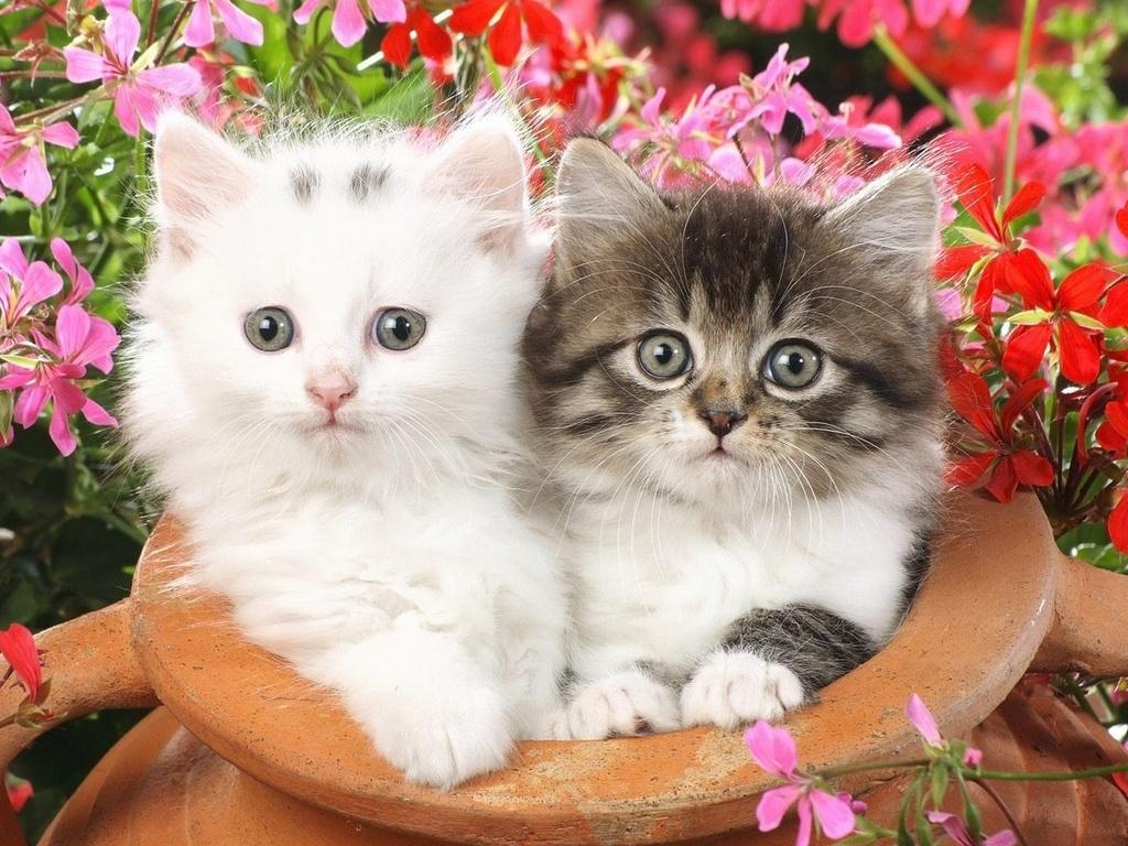 Обои на телефон котята красивые (1)