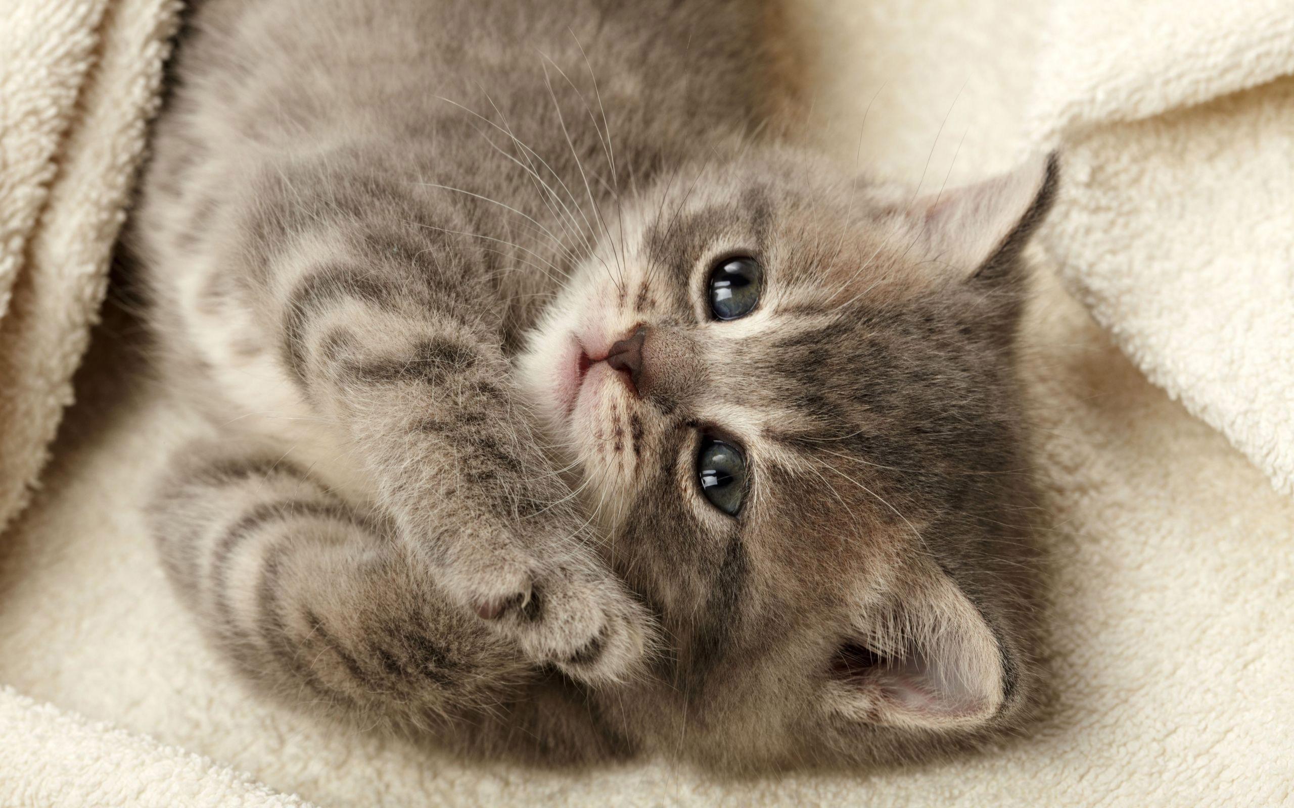 Обои на телефон котята красивые (18)
