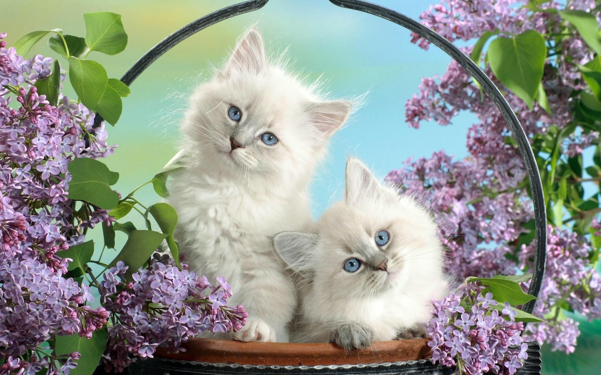 Обои на телефон котята красивые (19)