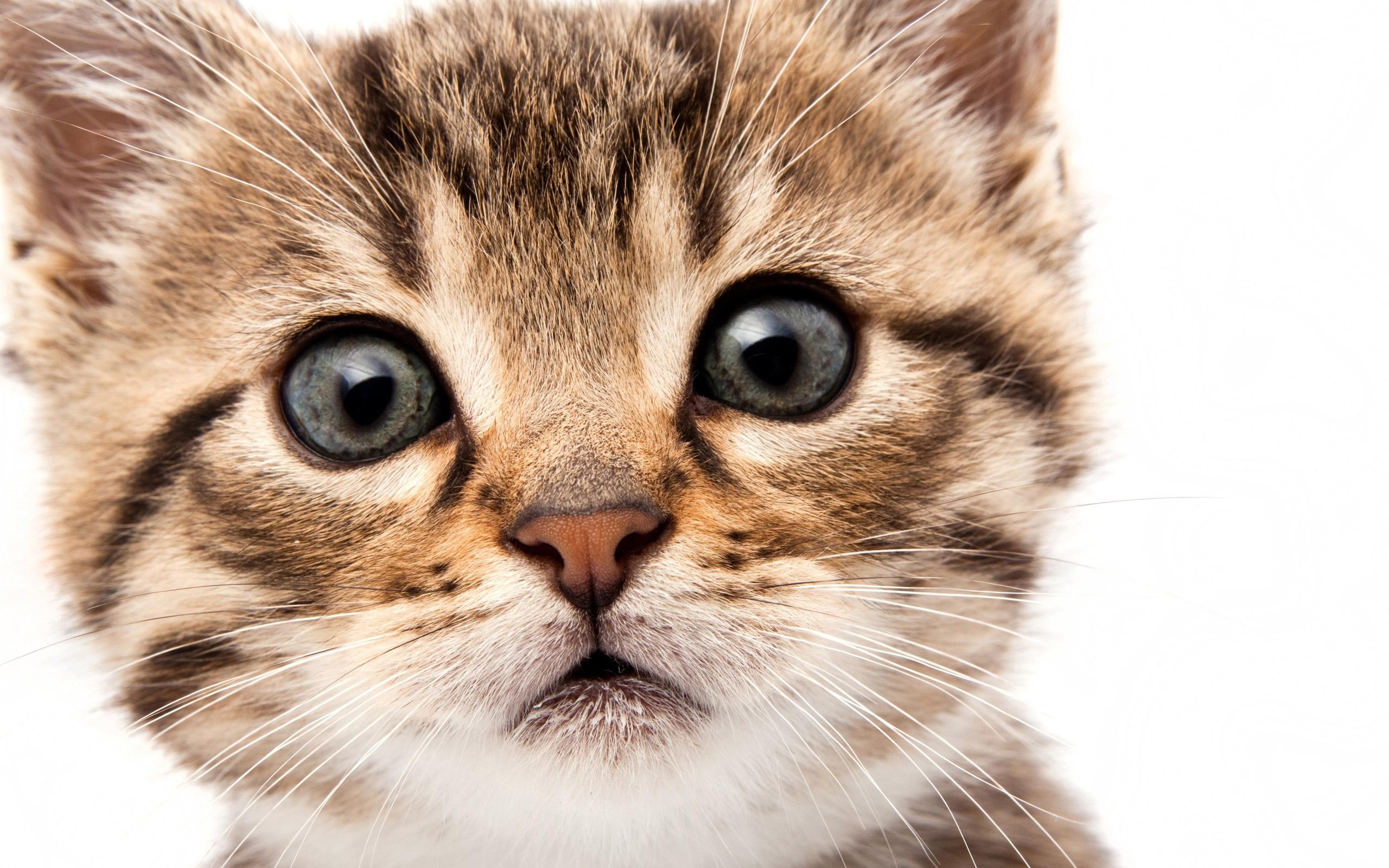 Обои на телефон котята красивые (2)