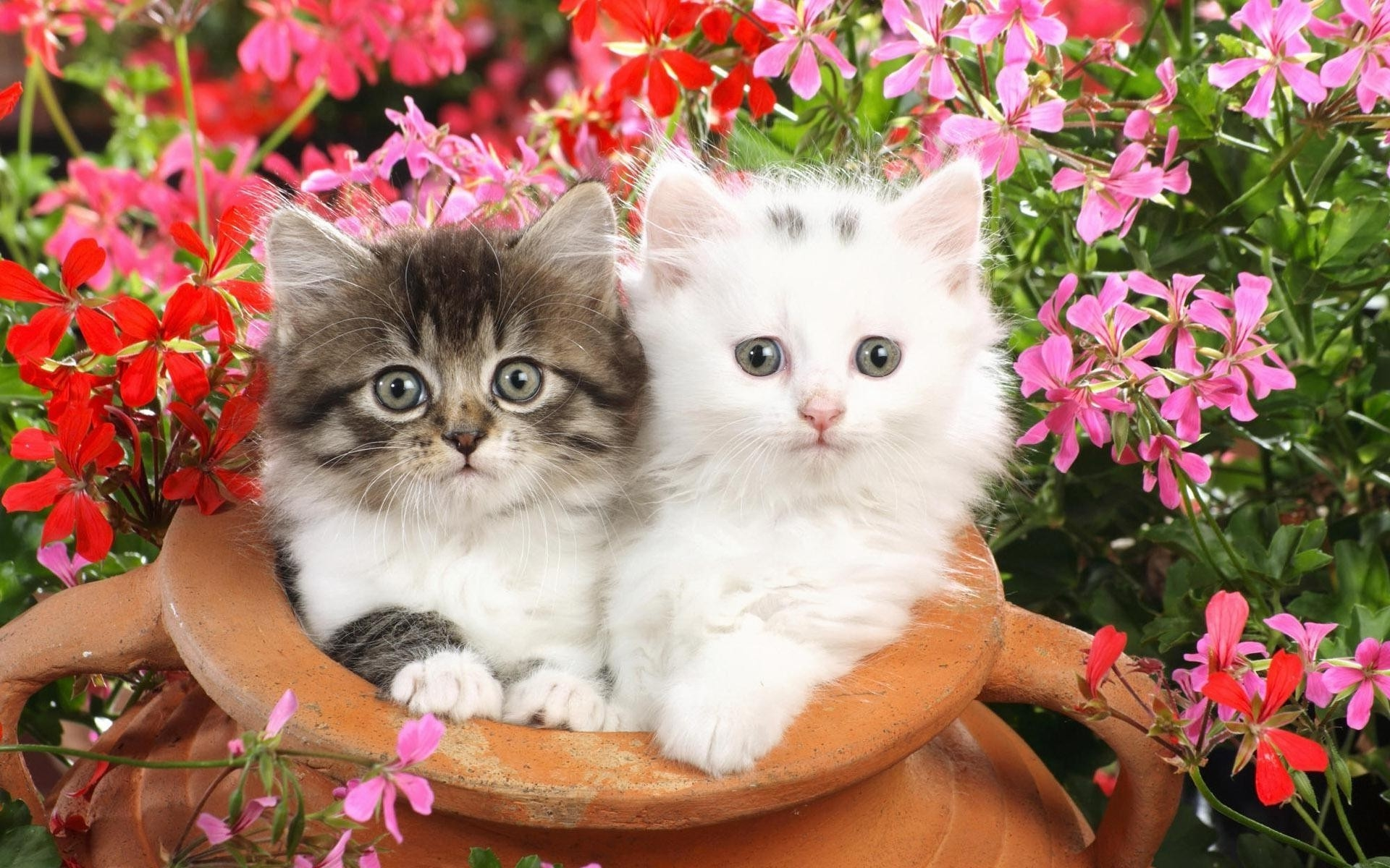 Обои на телефон котята красивые (3)